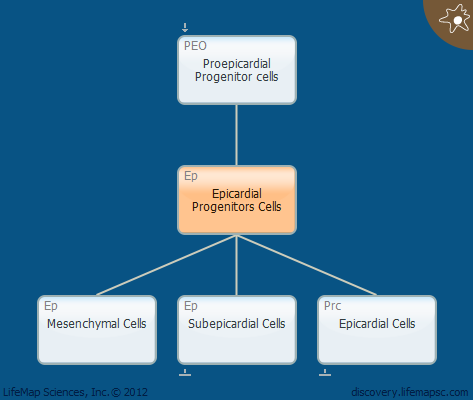 Epicardial Progenitors Cells