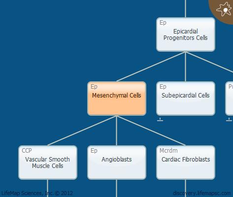 Mesenchymal Cells