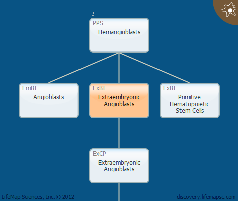 Extraembryonic Angioblasts
