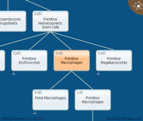 Primitive Macrophages