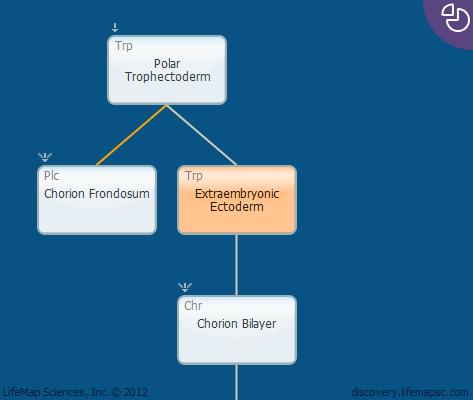 Extraembryonic Ectoderm