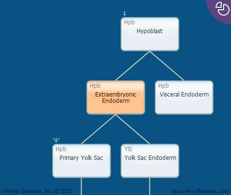 Extraembryonic Endoderm