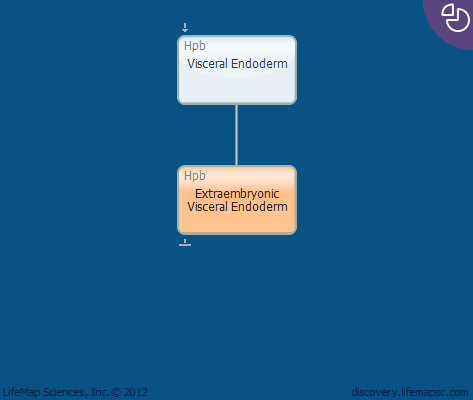 Extraembryonic Visceral Endoderm