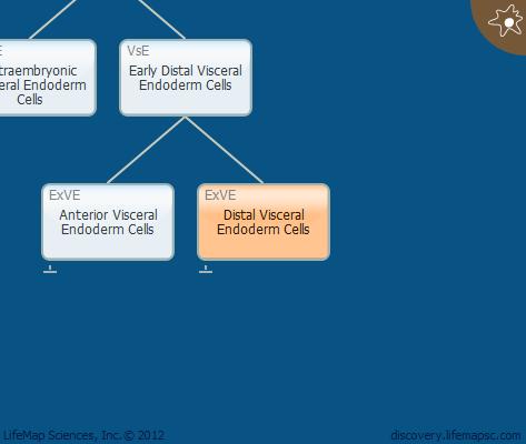 Distal Visceral Endoderm Cells