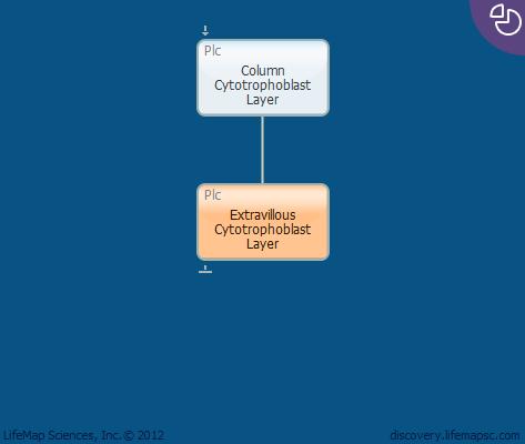 Extravillous Cytotrophoblast Layer