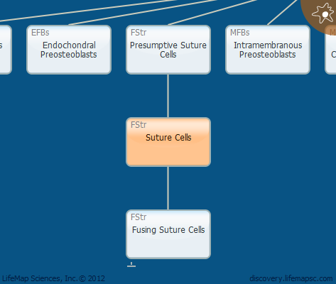 Suture Cells