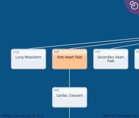 First Heart Field