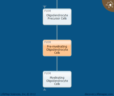 Pre-myelinating Oligodendrocyte Cells