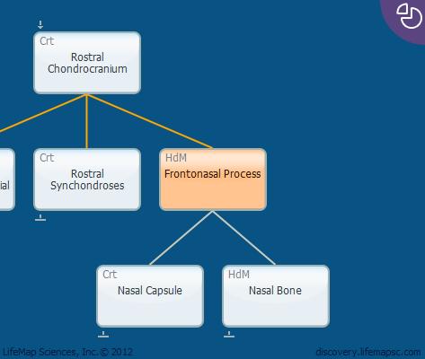 Frontonasal Process