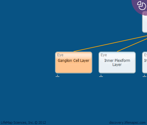 Ganglion Cell Layer