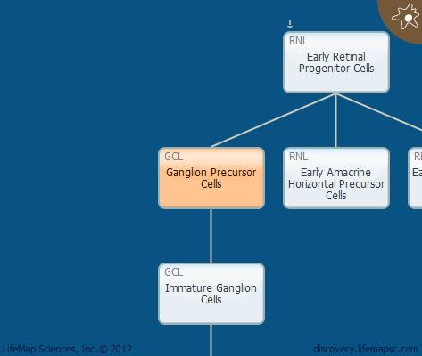 Ganglion Precursor Cells