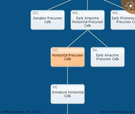 Horizontal  Precursor Cells