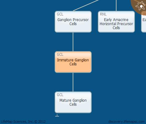 Immature Ganglion Cells