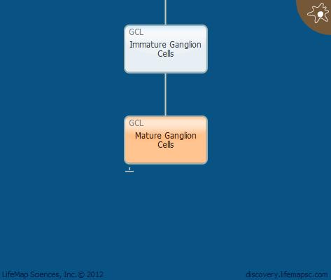 Mature Ganglion Cells