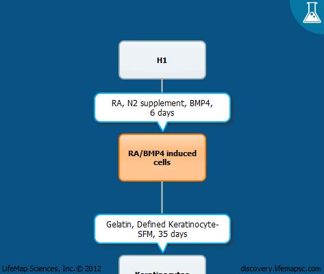 Generation of keratinocytes from stem cells using retinoic acid and bone morphogenetic protein