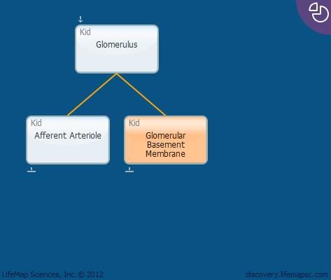 Glomerular Basement Membrane