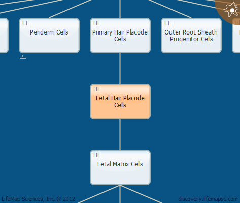 Fetal Hair Placode Cells