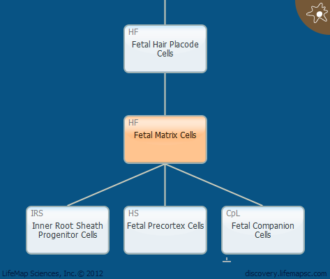 Fetal Matrix Cells