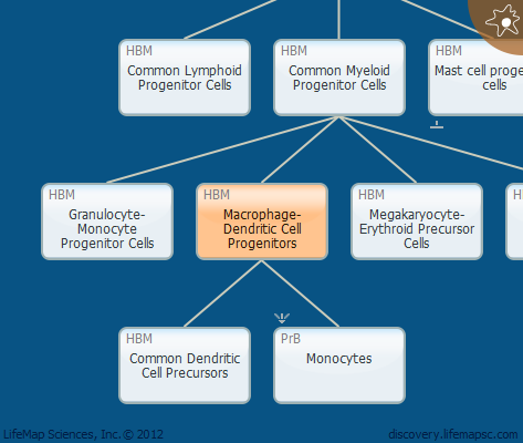 Macrophage-Dendritic Cell Progenitors
