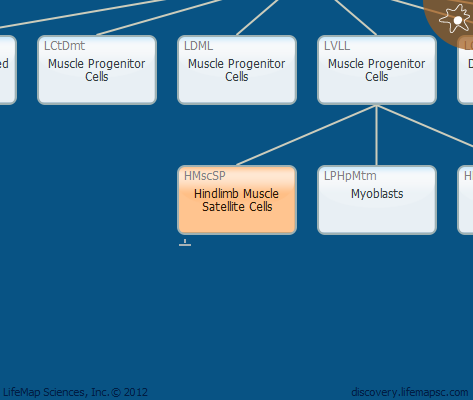 Hindlimb Muscle Satellite Cells