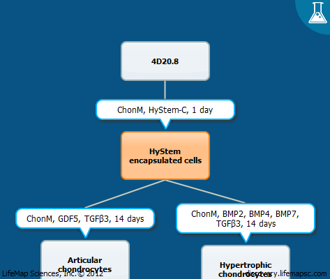 HyStem chondrogenic differentiation