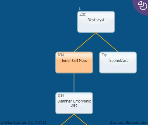Inner Cell Mass