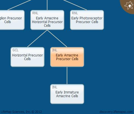 Early Amacrine Precursor Cells