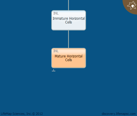 Mature Horizontal Cells