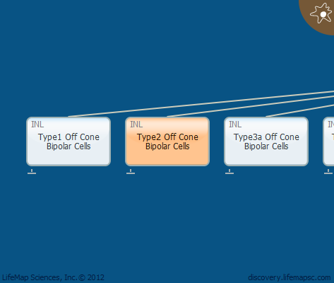 Type2 Off Cone Bipolar Cells