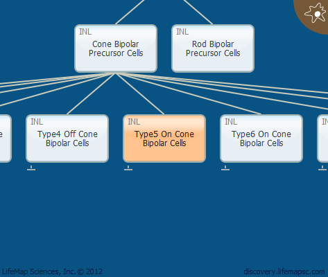 Type5 On Cone Bipolar Cells