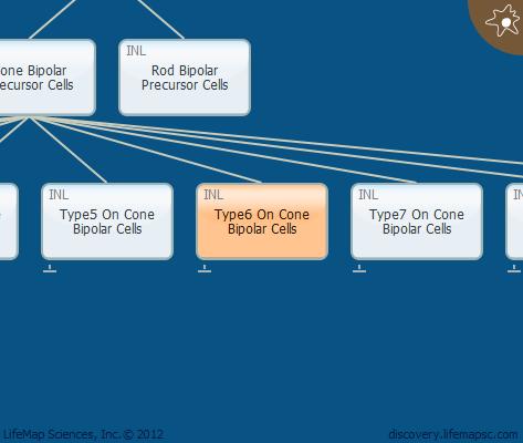 Type6 On Cone Bipolar Cells