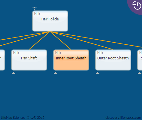 Inner Root Sheath