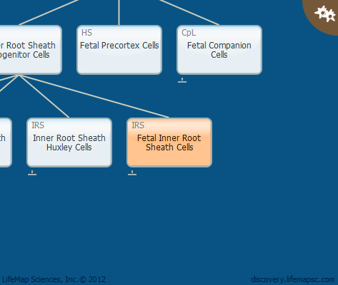 Fetal Inner Root Sheath Cells