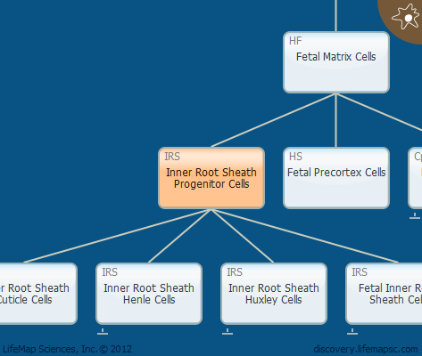 Inner Root Sheath Progenitor Cells