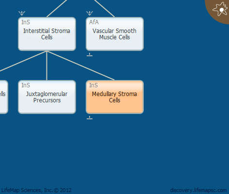 Medullary Stroma Cells