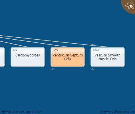 Ventricular Septum Cells