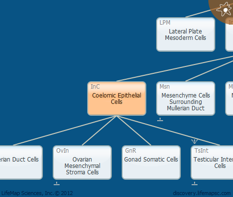 Coelomic Epithelial Cells