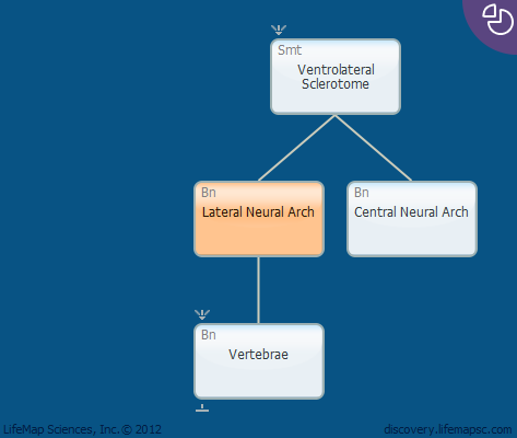 Lateral Neural Arch