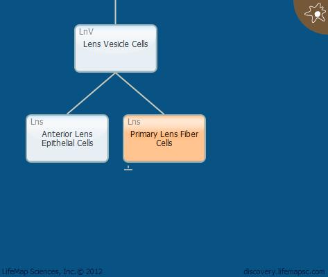 Primary Lens Fiber Cells