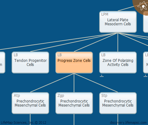Progress Zone Cells