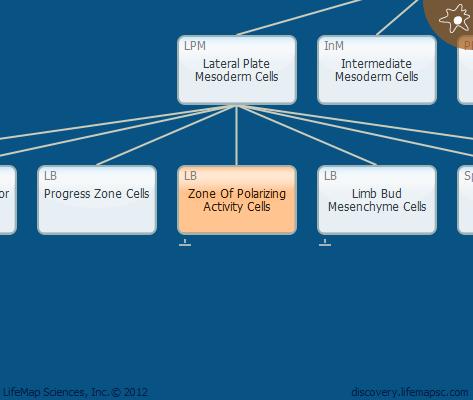Zone Of Polarizing Activity Cells