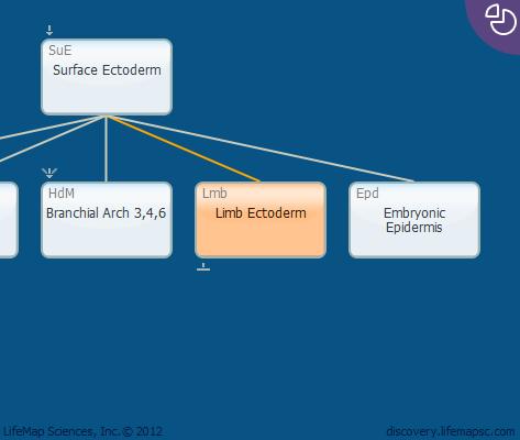 Limb Ectoderm