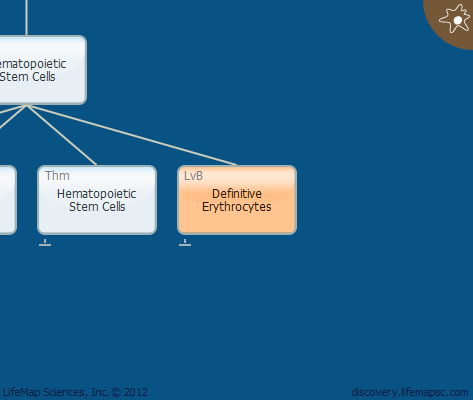 Definitive Erythrocytes