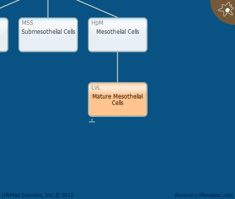 Mature Mesothelial Cells
