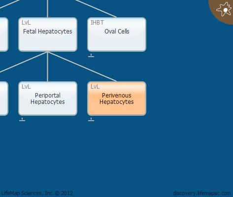 Perivenous Hepatocytes