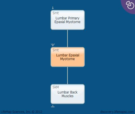 Lumbar Epaxial Myotome