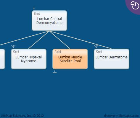 Lumbar Muscle Satellite Pool