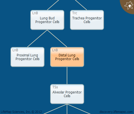 Distal Lung Progenitor Cells