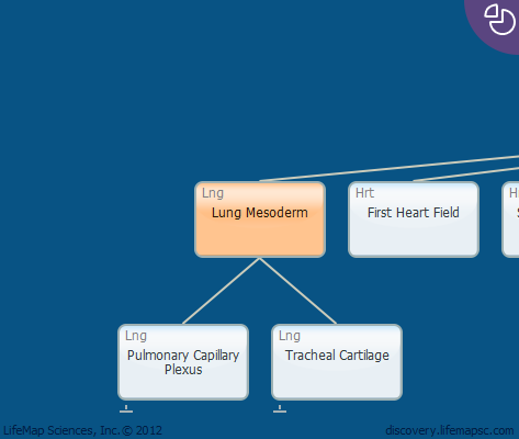 Lung Mesoderm