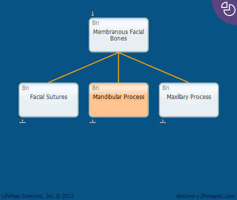 Mandibular Process